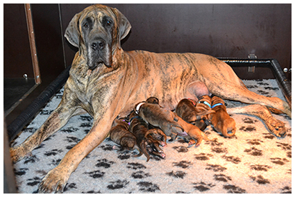 Pups: O Nest