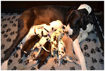 Pups O- Nest