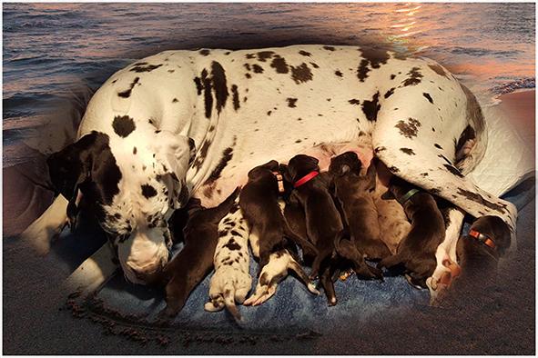 Pups: S Nest